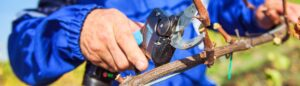 Campagnola LINE 24 plug-in Tijeras eléctricas con batería incorporada